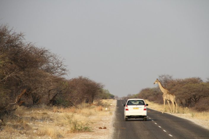 Etosha National park. It is home to vast herds of zebra, antelopes, hunting lions and leopards. It is a playground for a large numbers of elephants.