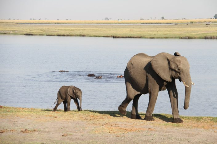 Chobe National Park, Bostwana...Chobe river is a lifeblood of this national park which is home to large herds of African Elephants.