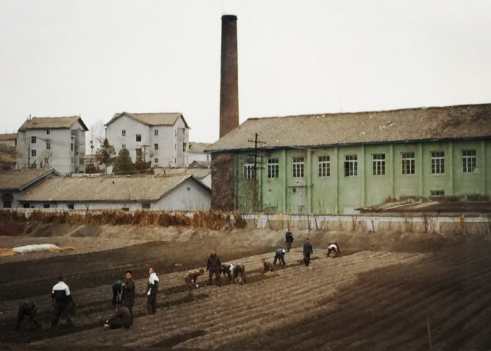 Almost 25% of North Korea's labor force works in agriculture. Major crops are rice and potatoes. Farmers are required to hand over a portion of their production to the government which then distributes it through public distribution system to the population in urban regions, which don't grow their own food.