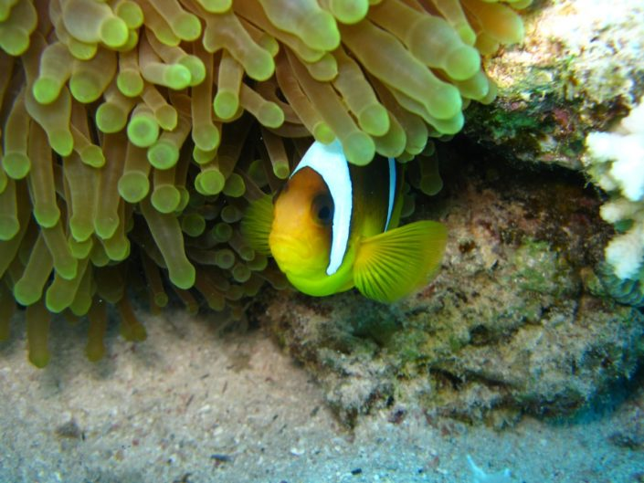 Red Sea Diving Safari, Egypt