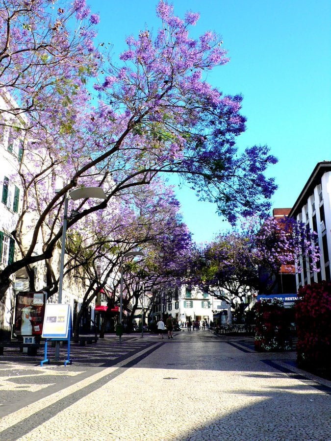 Funchal Is the largest and also a capital city of Madeira. Funchal is modern, cosmopolitan city with great climate all year round. The city was founded by Portuguese sailors more than 5 centuries ago. Jacaranda trees in bloom contribute enormously to the character of the city.