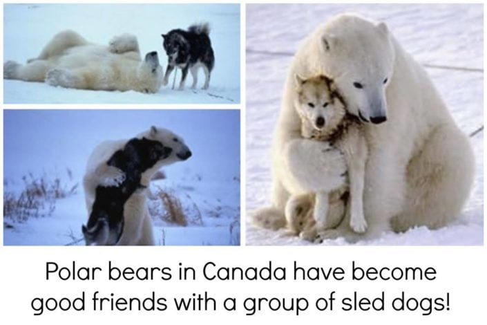 The bear´s and dog´s friendship.