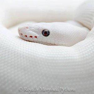Snakes, lizards and geckos